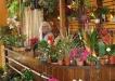 Amenajare - Stand de flori - Ulpia Deva